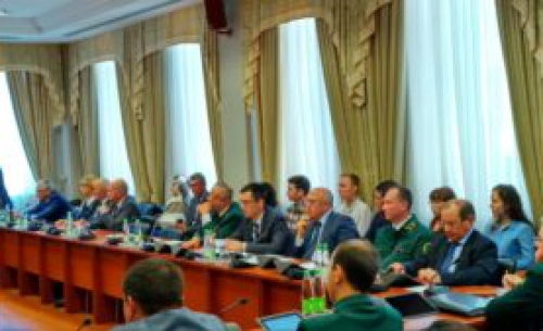 Жителям Татарстана разрешат бесплатно собирать валежник с 2019 года