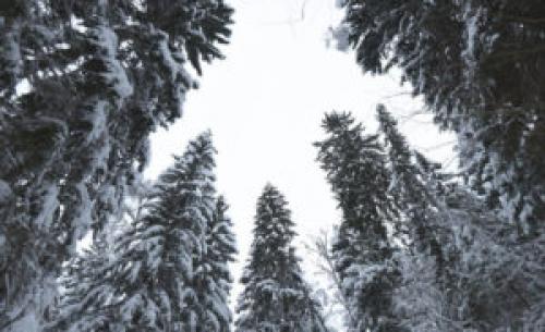 Площадь особо охраняемых природных зон Подмосковья выросла почти на 5 тыс га в 2018 году