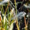 В Клину обнаружили новые места обитания двух редких растений
