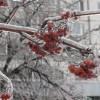 Погода в России сейчас имеет черты всех четырех сезонов года
