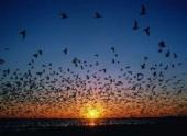 Изменение в магнитном поле Земли привели к массовой гибели птиц