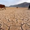Потепление климата к 2020 году заставит голодать каждого пятого человека