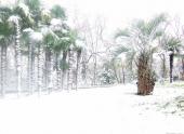 Непривычное зрелище — снег в Сочи