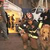 Собака вытащила хозяев из горящего дома