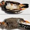 Новый случай массовой гибели птиц, на этот раз – в Нью-Йорке