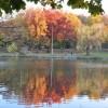 Качество воды зависит от здоровья деревьев в окрестностях водозабора