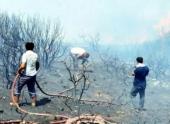 На эгейском побережье Турции разгорелся лесной пожар