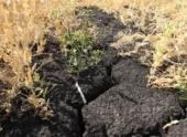 Режим ЧС отменен в районе Чувашии, где из-за засухи погибли посевы
