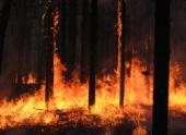 Режим ЧС из-за лесных пожаров введен в одном из поселков ХМАО