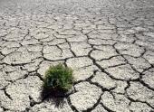 Режим ЧС введен во втором районе Ростовской области из-за засухи