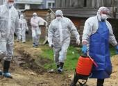 Воронежские власти выплатят 40 млн руб за свиней, убитых из-за чумы