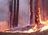 Пожар рядом с нефтебазой в Северобайкальске потушен