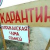 Вспышка африканской чумы свиней выявлена в Тульской области