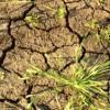Режим ЧС из-за засухи введен уже в двух районах Калмыкии