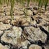Режим ЧС из-за засухи введен уже в 14 районах Оренбургской области