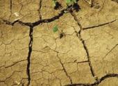 Еще в трех районах Оренбургской области из-за засухи введен режим ЧС