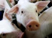 Ограничения по продаже скота ввели в 10 районах Белгородской области