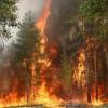 ЧС в связи с пожарами введена в одном из районов Архангельской области