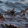 Сто тонн нефти вылилось в море близ восточного побережья Кипра