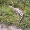 СК проверяет данные о гибели рыбы в реке Исеть, где видели крокодила