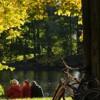 Законодательство в США помогло лесам «прийти в себя», считают ученые