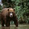 Медведь не пускал на кладбище жителей села на севере Томской области