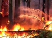Причиной крупного лесного пожара в Калифорнии стал охотничий костер