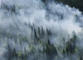 Минприроды: ущерб от лесных пожаров в РФ в 2013 г уменьшился в 6 раз