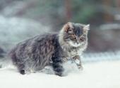 Коты, унесенные ветром
