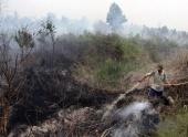 Лесной пожар в Индонезии продолжает распространяться