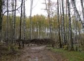 Эксперты: закон о лесном надзоре сохранит леса юга и средней полосы РФ