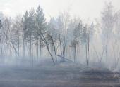 WWF: около 20 тыс га леса сгорело возле «Земли леопарда» в Приморье