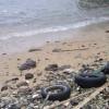 Пляжи Британских островов с каждым годом становятся более загрязненными
