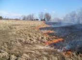 10% территории заказника в Приамурье выгорело из-за поджогов травы