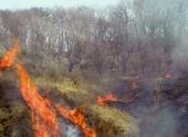 На Дальнем Востоке возникло более 100 очагов лесных пожаров