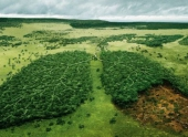 В Боливии и Малайзии отмечается рост темпов обезлесения