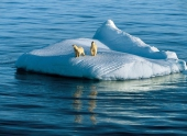 Климат в Арктике меняется из-за растительности
