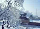 Жителям Ленинградской области пообещали не очень холодную зиму