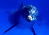 Девочка рассмешила дельфина в аквапарке