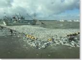 Миллионы мертвых сардин выбросило на побережье Японии