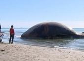 Во Франции на берег выбросило тушу кита
