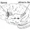 В мозге человека выявлена уникальная структура