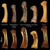 Предки человека начали использовать инструменты раньше, чем мыслить