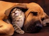 Что снится животным?