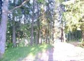 Гринпис и власти Подмосковья решили вместе следить за рубками в ценных лесах