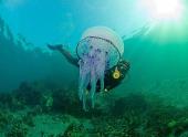 Медузы-охотницы в роли суперкомпьютеров?