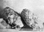 Каменный мозг из палеозоя