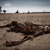 США ожидает самая сильная за последнее тысячелетие засуха