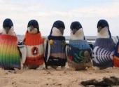 Старый австралиец год вязал свитера для пингвинов