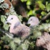 Кормушки вредят некоторым птицам
